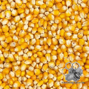 кукуруза,